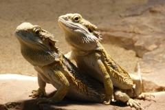 reptile-97233_1920
