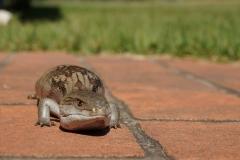 lizard-177971_1920