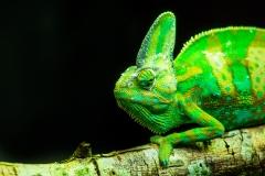 lizards-3158450_1920