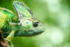 reptile-316735_1280