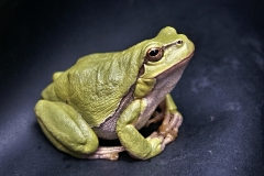 frog-111179_1920