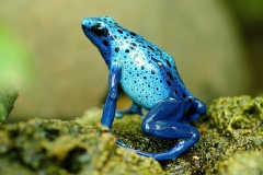 frog-1335022_1920