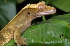 gecko-165030_1280