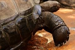 giant-tortoises-3353315_1920