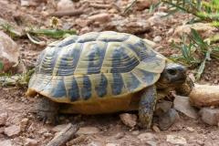 turtle-1439071_1920