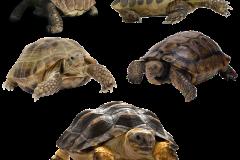 turtle-2902628_1920