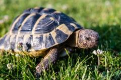 turtle-3422221_1920