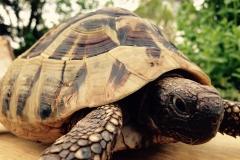 turtle-765767_1920